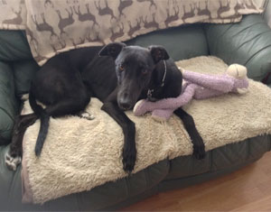 Sadie-homed-monkey300x235