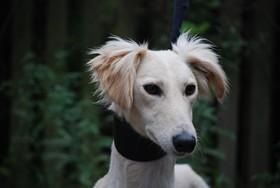 Astro ears