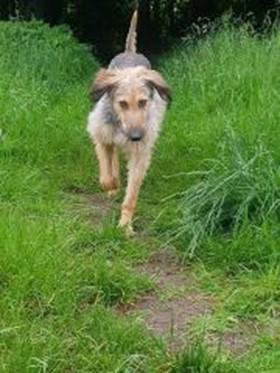 Darby run