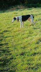 Betty spag field