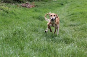 Tetley run