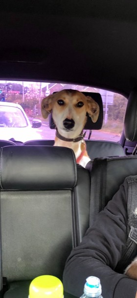 Beam back seat