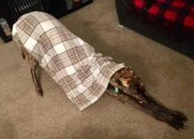 Tandem blanket